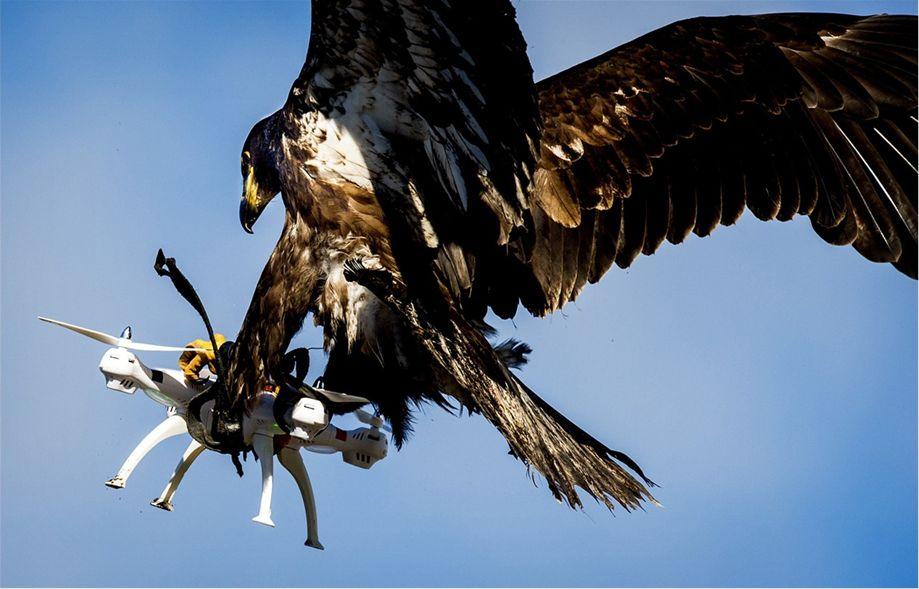 dron, orao, krijumčari